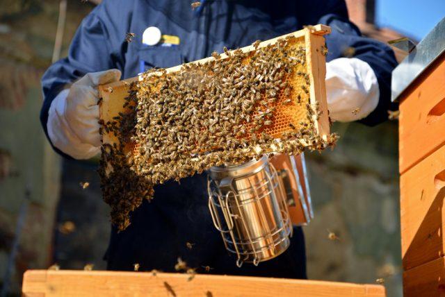 Aj včelie bodnutie môže liečiť