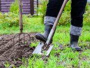 Pozrite sa, čo potrebuje vaša záhrada po zime