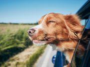 Objavujem Slovensko azahraničie so štvornohým spoločníkom...cestovanie so psom vdopravných prostriedkoch...