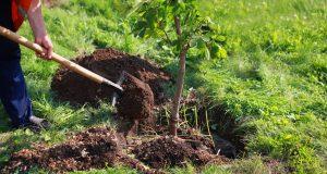 Aké stromy je lepšie sadiť na jeseň a prečo